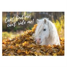 Carte Postale Poney Automne