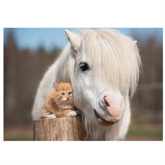 Carte Postale Poney Chatton