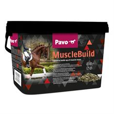 Muscle Build Pavo